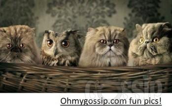 Ohmygossip.com fun pics! Vol3 (Read: Lol3)