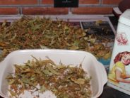 Helena-Reet: Growing, collecting and drying herbs for the winter + a LITTLE guide to the effect of various herbal teas!