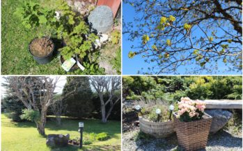Helena-Reet: Activities in the garden and the first purchases from the horticulture centres