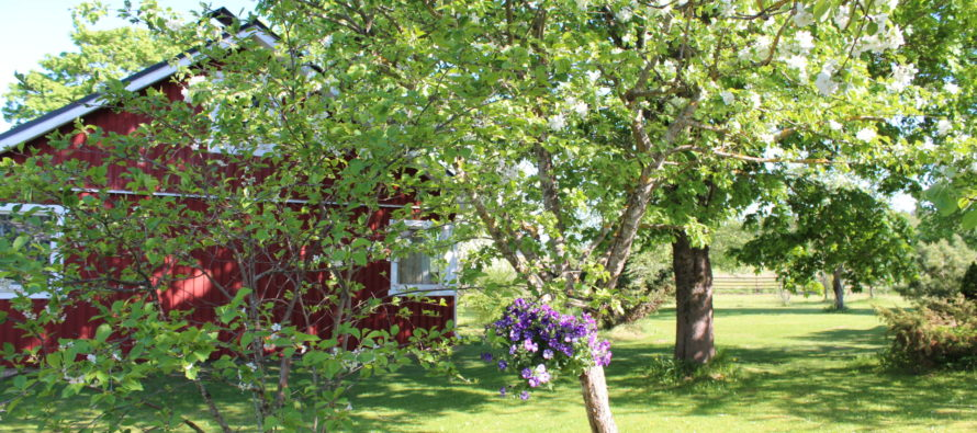 Helena-Reet: Life in the countryside – bird song for an alarm clock!