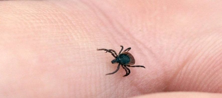 Possibilities to repel ticks with natural domestic methods