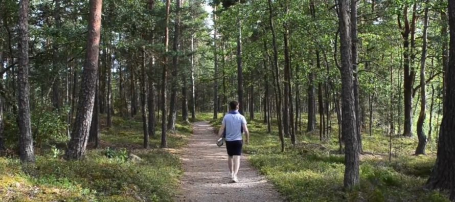 IMPORTANT TIPS! How to survive in Swedish nature, How do you protect yourself from a bear attack? + 10 dos and don'ts